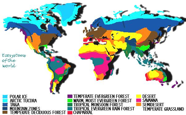 coniferous forest maps of the tropical with Biomesrevised on World Forestry Distribution furthermore China World Map besides How To Draw Forests as well World Biomes Pin Map Rainforest Desert Savanna Tundra further 490.